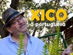 Fadista, Humorista, Cantor, Xico à Portuguesa, espetaculo, baile, bailarico, conjunto, grupo musical